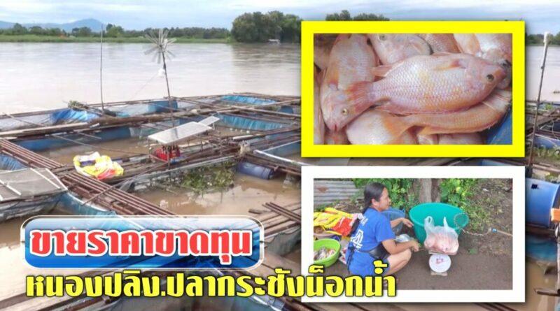 ฝนตกแม่น้ำปิงเอ่อ ขุ่น ไหลเชี่ยว ปลากระชังน็อกน้ำ ขายราคาขาดทุน